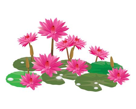 pink lotus flower vector design