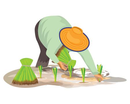 farmer transplant rice seeding in paddy field Illusztráció
