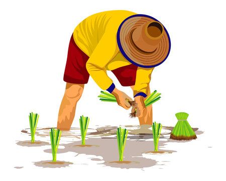 Agricultor trasplantar la siembra de arroz en los arrozales Ilustración de vector