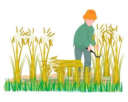 farmer harvest rice in paddy field vector design Illustration
