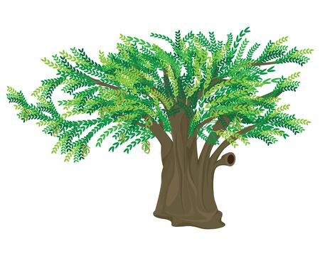 tamarind tree on white background