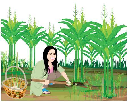 agriculturist harvest galangal vector design