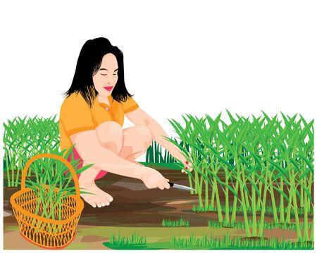 agriculturist harvest vegetable vector design
