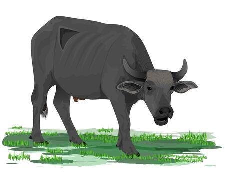 buffalo vector design 向量圖像