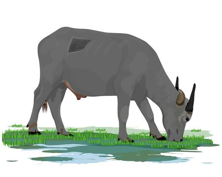 buffalo eat grass vector design