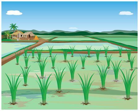 Planta de arroz en diseño vectorial de campo de arroz