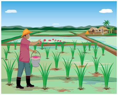 agriculteur sème le fumier dans la conception de vecteur de rizière Vecteurs
