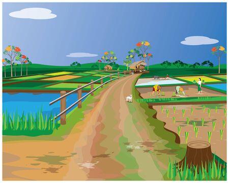 farmer transplant rice seeding in paddy field vector design Illusztráció