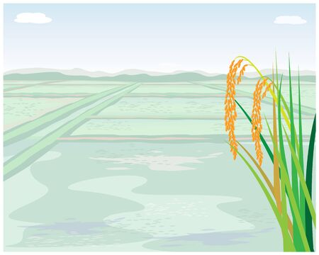 rice plant with paddy field vector design Illustration
