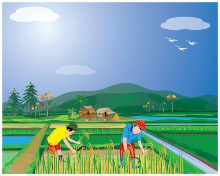 farmer harvest rice in paddy field vector design Illusztráció
