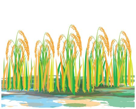rice plant vector design