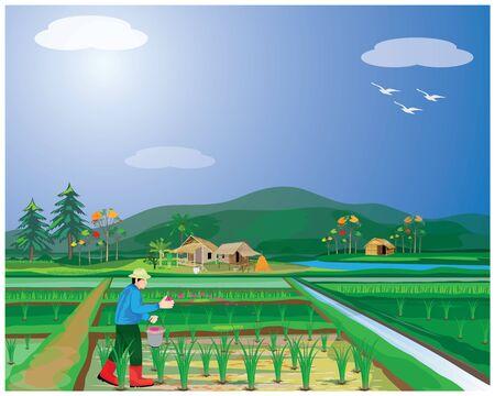 farmer manure into rice plant vector design
