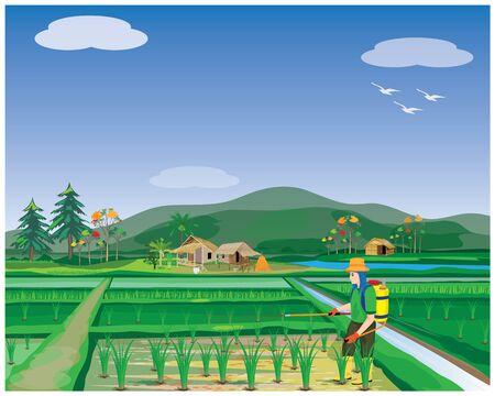 farmer sprays rice plant in paddy field vector design