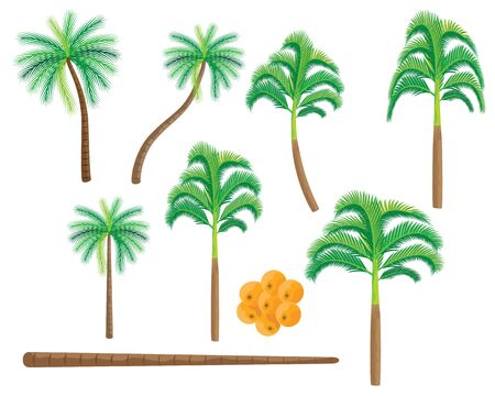 palm tree on white background vector design
