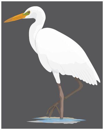 white heron bird vector design
