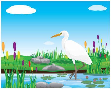 white heron bird in pond vector design Illusztráció