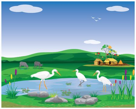 white heron in pond at countryside vector design Illusztráció