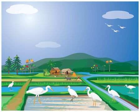 white heron in paddy field vector design