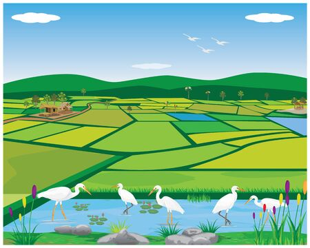 white heron in pond at paddy field vector design Illusztráció