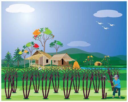 agriculturist harvest sugar cane plant vector design