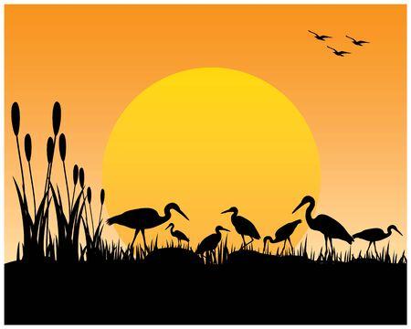 silhouette heron on field vector design