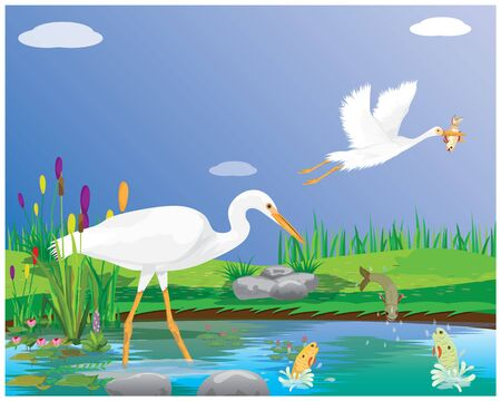 white heron find fish in canal vector design