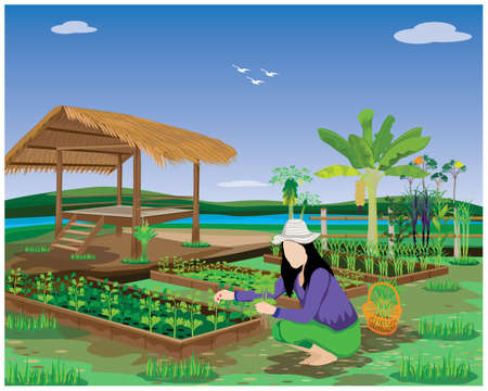 agriculturist harvest vegetable in garden vector design