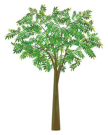 isolated green tree on white background vector design Vektorové ilustrace