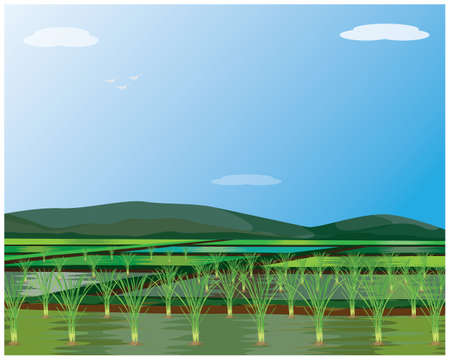 paddy field with blue sky background vector design