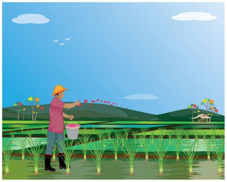 farmer manure into rice plant in paddy field vector design