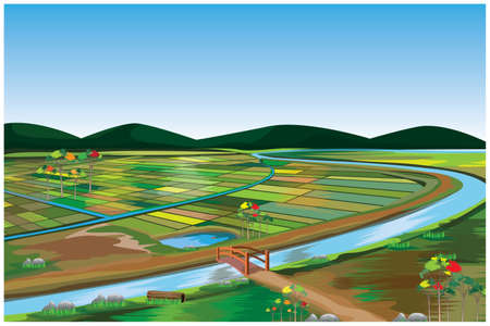 large paddy field at countryside vector design 向量圖像