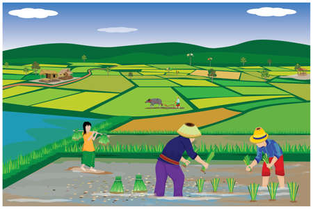 farmer sow manure into paddy field vector design