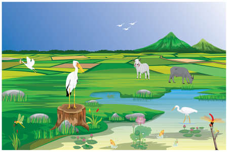 White egrets feed on fish in swamps vector design