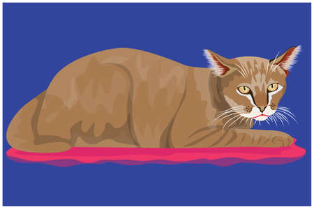 isolated cat on blue background vector design