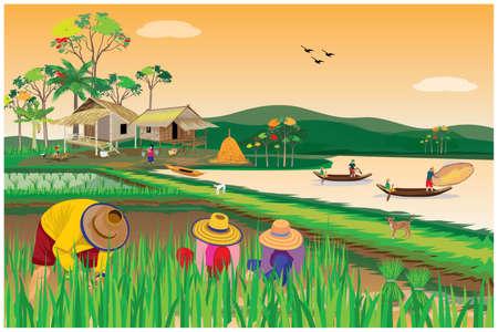 farmer work  in paddy field vector design Ilustracja