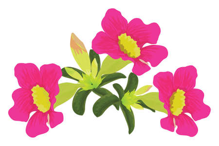 isolated pink Plumeria flower  white background vector design Ilustracja