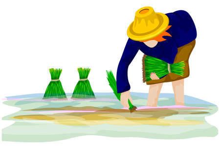 farmer transplant rice seeding in paddy field vector design Ilustracja