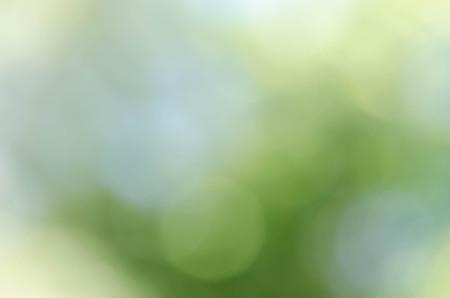 Abstract natural green bokeh background