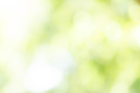 Green bokeh out of focus background from nature forest Archivio Fotografico
