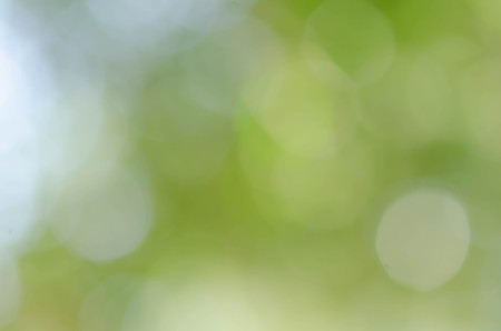 Green bokeh out of focus background from nature forest 版權商用圖片