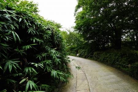 hong reung arboretum, Seoul, Republic of Korea Stock Photo - 20273720