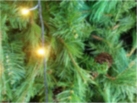 Selective focus and Blurry; Image of Sparkling green pine tree background for Christmas decoration