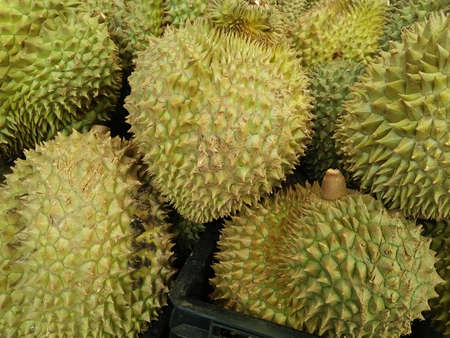 Durian (King of Fruits) group named
