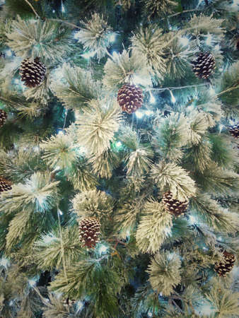 Sparkling green pine tree and Pine cone background for Christmas decoration 免版税图像
