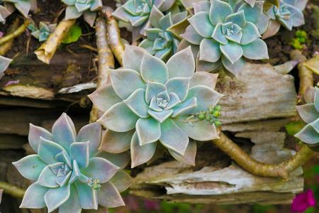 succulent: Succulent plant Stock Photo