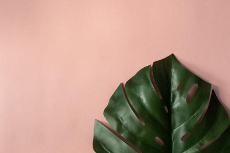 One sheet big monstera on pink background Zdjęcie Seryjne