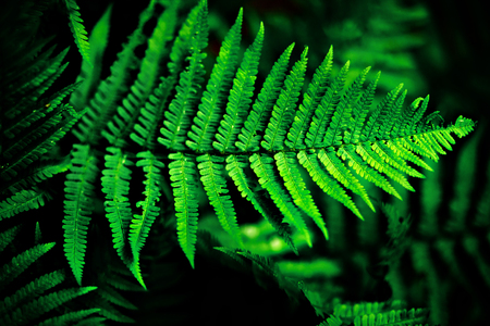Bright fern leaves in low key contrast Stock Photo