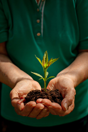 Plant in the hands close-up ecology nature conservation Stock Photo