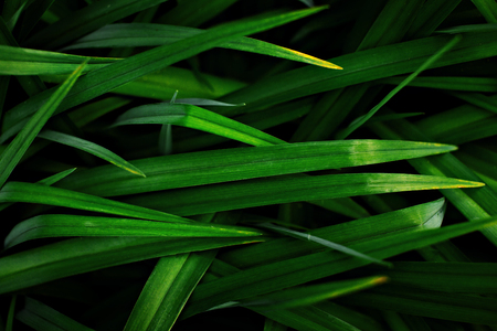 Grass with long leaves in a low key Banque d'images
