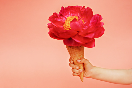 Red peony in waffle cone in baby hand 写真素材